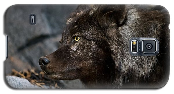 Black Wolf Galaxy S5 Case