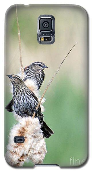 Blackbird Pair Galaxy S5 Case by Mike  Dawson