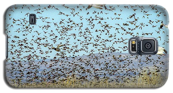 Blackbirds And Geese Galaxy S5 Case