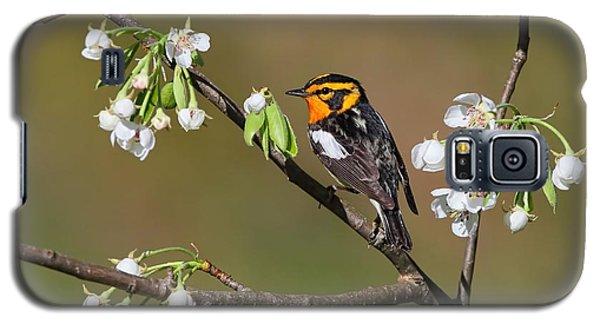 Blackburnian Warbler Galaxy S5 Case