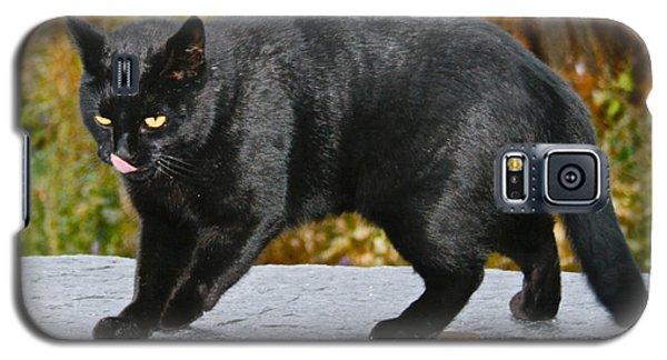 Blackjack Licking His Nose Galaxy S5 Case