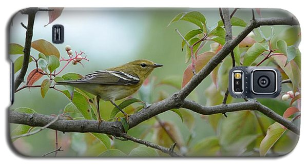 Blackpoll Warbler In The Fall Galaxy S5 Case