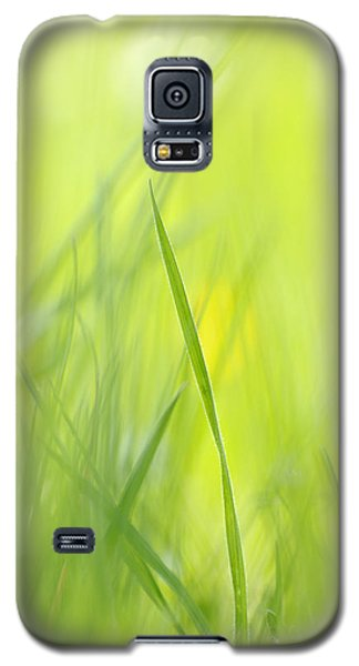 Blades Of Grass - Green Spring Meadow - Abstract Soft Blurred Galaxy S5 Case by Matthias Hauser