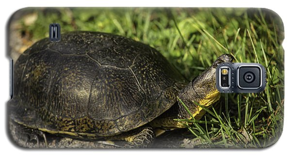 Blanding's Turtle Galaxy S5 Case