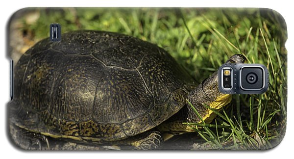 Blanding's Turtle Galaxy S5 Case