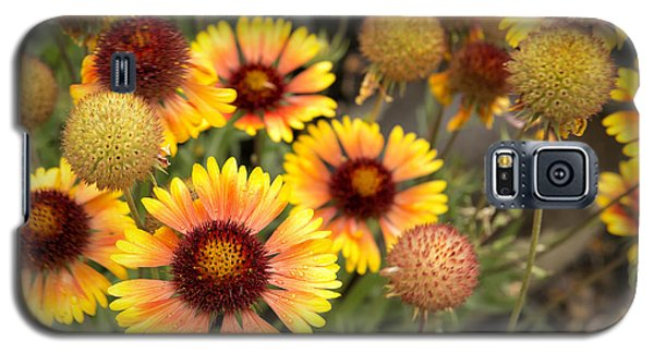 Blanket Flowers  Galaxy S5 Case