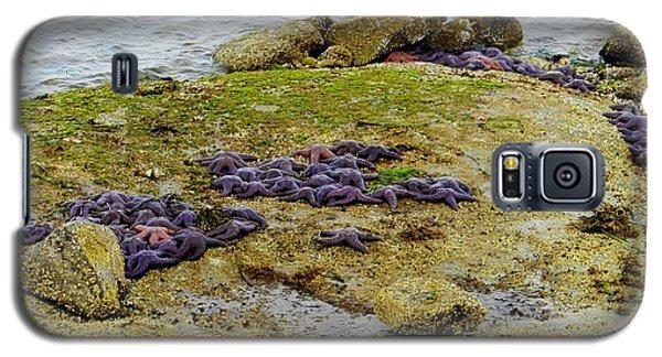 Galaxy S5 Case featuring the photograph Blanket Of Seastars by Karen Molenaar Terrell