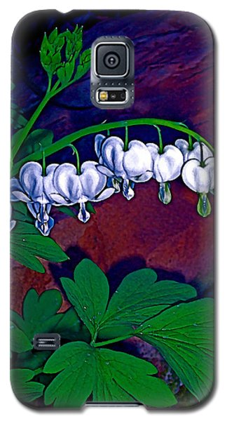 Galaxy S5 Case featuring the photograph Bleeding Heart 1 by Pamela Cooper