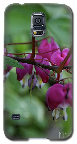 Galaxy S5 Case featuring the photograph Bleeding Heart by Linda Shafer