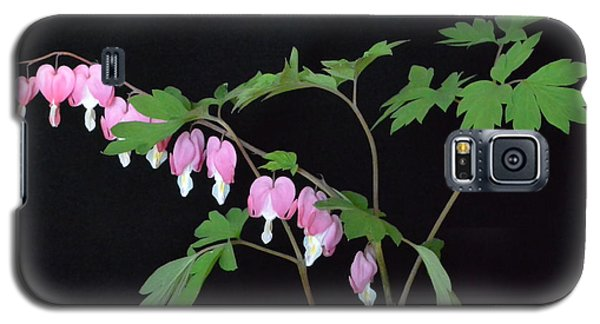 Galaxy S5 Case featuring the photograph Bleeding Hearts 2 by Jeannie Rhode