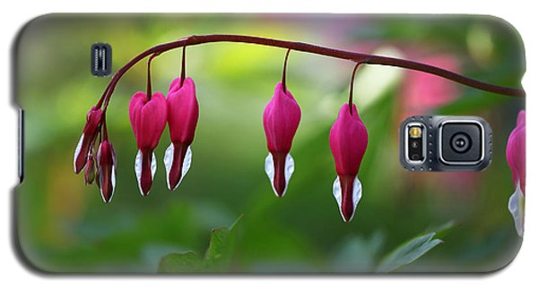 Galaxy S5 Case featuring the photograph Bleeding Hearts by Annie Snel