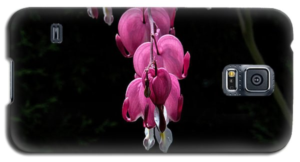 Galaxy S5 Case featuring the photograph Bleeding Hearts by Leif Sohlman