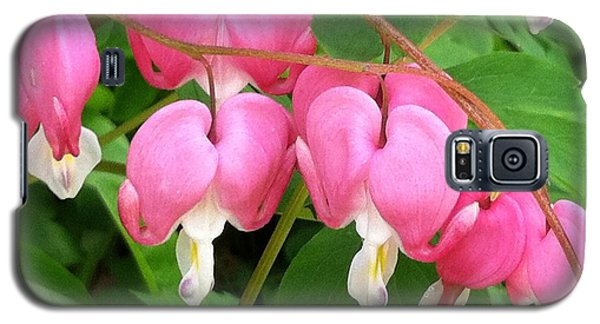 Bleeding Hearts On Parade Galaxy S5 Case