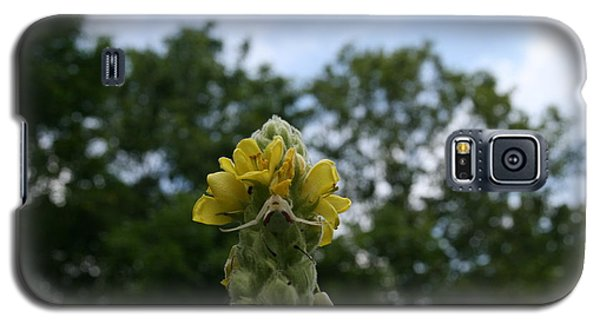 Galaxy S5 Case featuring the photograph Blended Golden Rod Crab Spider On Mullein Flower by Neal Eslinger