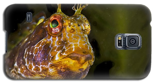 Blenny In Deep Thought Galaxy S5 Case