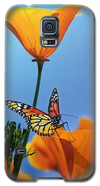 Blessed By The Sun Galaxy S5 Case