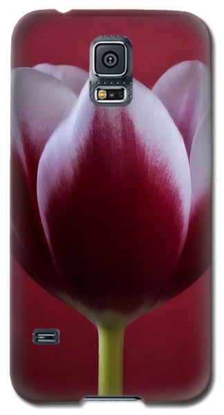 Abstract Red White Flowers Tulips Macro  Photography Art Galaxy S5 Case