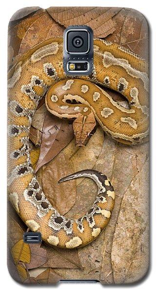 Blood Python Galaxy S5 Case