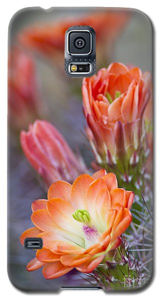 Galaxy S5 Case featuring the photograph Bloom In Orange by Bryan Keil