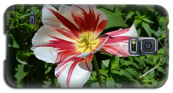 Galaxy S5 Case featuring the photograph Bloom by Tara Potts