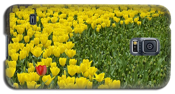 Bloom Where You Are  Planted Galaxy S5 Case by Robert Camp