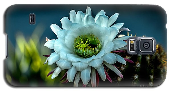 Blooming Argentine Giant Galaxy S5 Case by Robert Bales