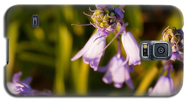 Blooming Bluebells Galaxy S5 Case