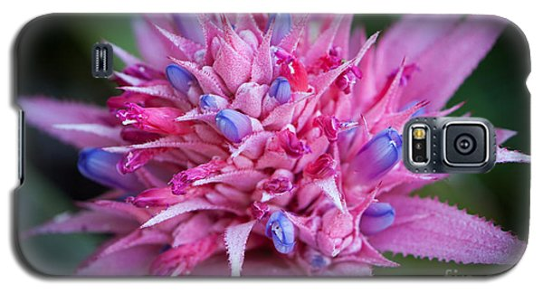 Blooming Bromeliad Galaxy S5 Case