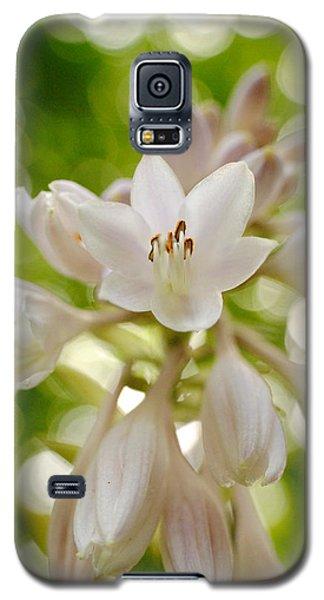 Blooming Hosta Galaxy S5 Case by Kelly Nowak