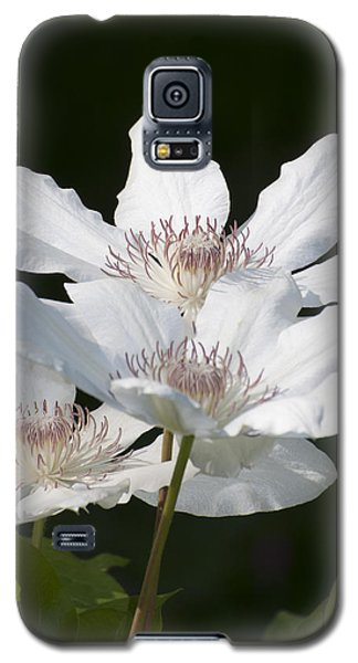 Blooming In Spring Galaxy S5 Case