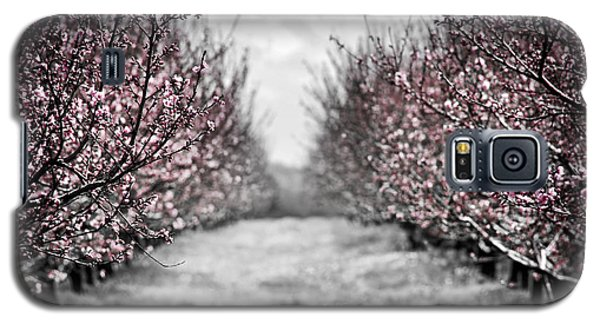 Blooming Peach Orchard Galaxy S5 Case by Elena Elisseeva