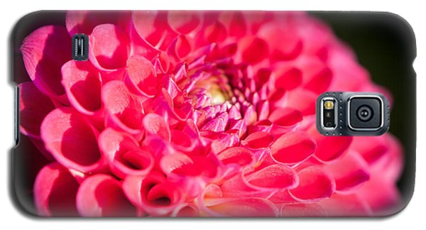 Blooming Red Flower Galaxy S5 Case