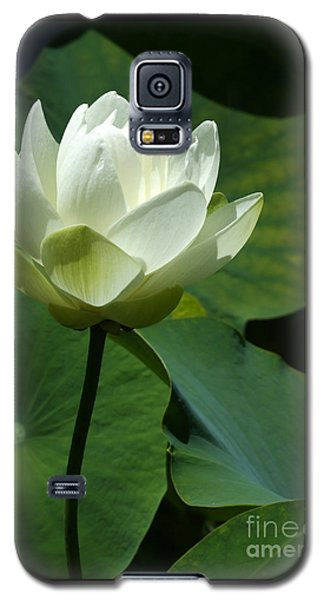 Blooming White Lotus Galaxy S5 Case