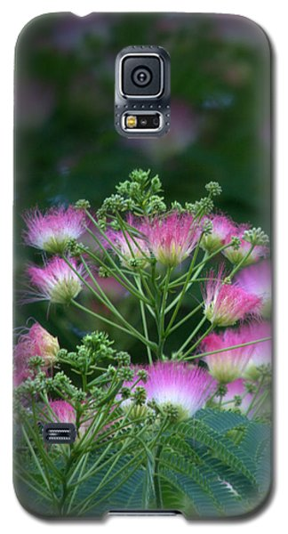 Blooms Of The Mimosa Tree Galaxy S5 Case