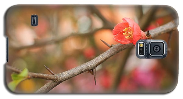 Galaxy S5 Case featuring the photograph Blossom Amidst The Thorns by Lisa Knechtel