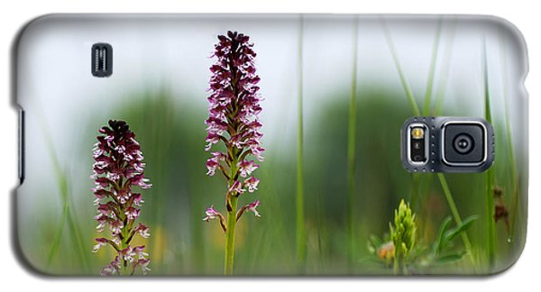 Galaxy S5 Case featuring the photograph Blossom Among Grass Straws by Kennerth and Birgitta Kullman