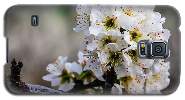Blossom Gathering Galaxy S5 Case by Terry Garvin