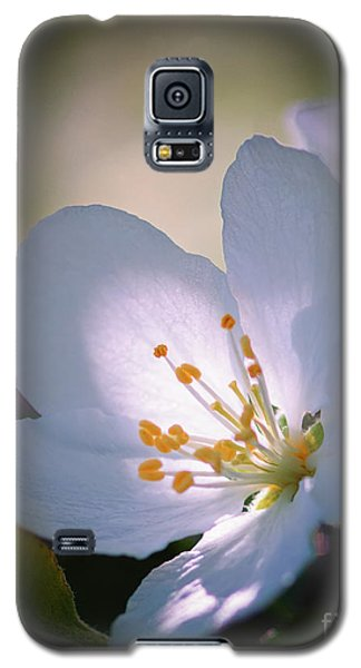 Blossom In The Sun Galaxy S5 Case