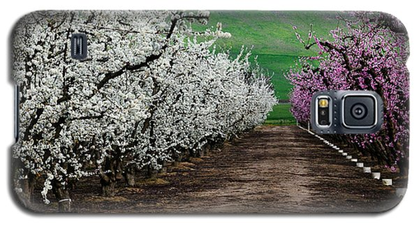 Blossom Standoff Galaxy S5 Case by Terry Garvin