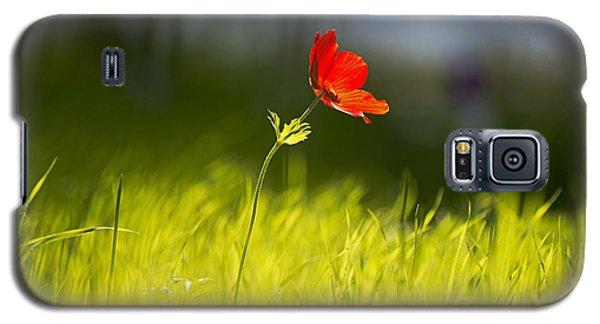 Blossomed Megiddo 1 Galaxy S5 Case by Dubi Roman