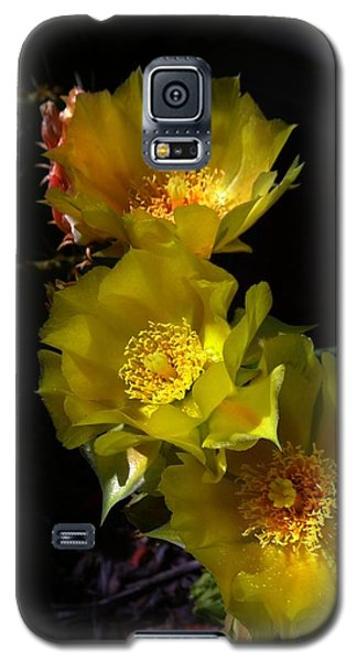 Blossoms At Dusk Galaxy S5 Case