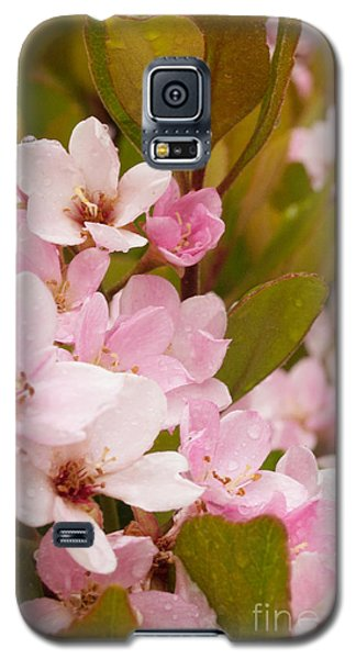 Blossoms Of The Rain Galaxy S5 Case by Rima Biswas