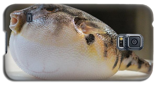 Galaxy S5 Case featuring the photograph Blowfish 2 by Cynthia Snyder