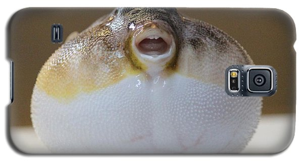 Galaxy S5 Case featuring the photograph Blowfish by Cynthia Snyder
