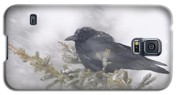 Blowin' In The Wind - Crow Galaxy S5 Case by Sandra Updyke