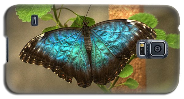 Blue And Black Butterfly Galaxy S5 Case