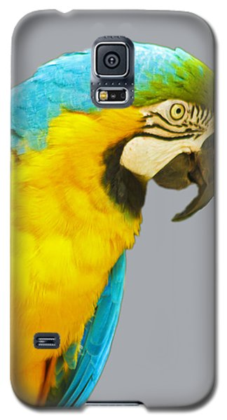 Blue And Gold Macaw Galaxy S5 Case by Bill Barber