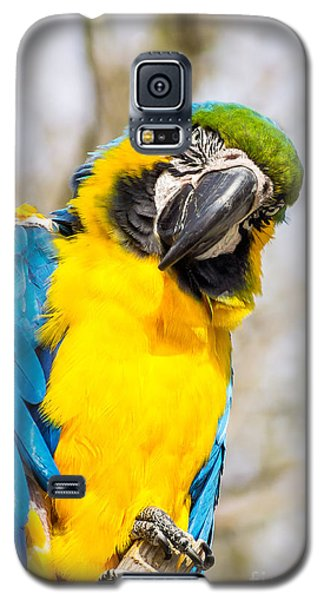 Blue And Gold Macaw Parrot Galaxy S5 Case
