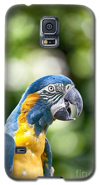 Blue And Gold Macaw V2 Galaxy S5 Case by Douglas Barnard