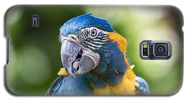 Blue And Gold Macaw V3 Galaxy S5 Case